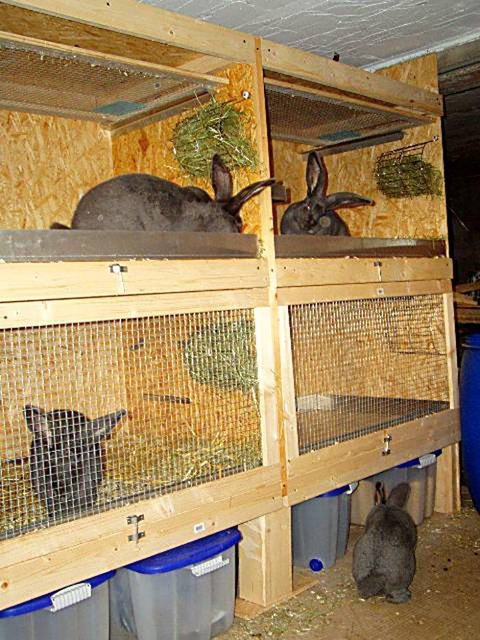 Клетка для кроликов гигантов своими руками