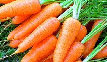 Когда выкапывать морковь и как понять, что оранжевый овощ готов к уборке