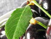 Сорта черешни для умеренного климата