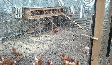 Фото гнезд установленных на помосте, fermer.ru