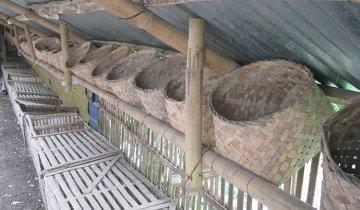 Плетенные гнезда, прикрепленные к балкам