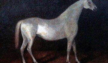 Изображение арабского жеребца Сметанка, wikimedia.org