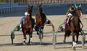 Почему орловскую породу лошадей называют символом возрождающейся России?