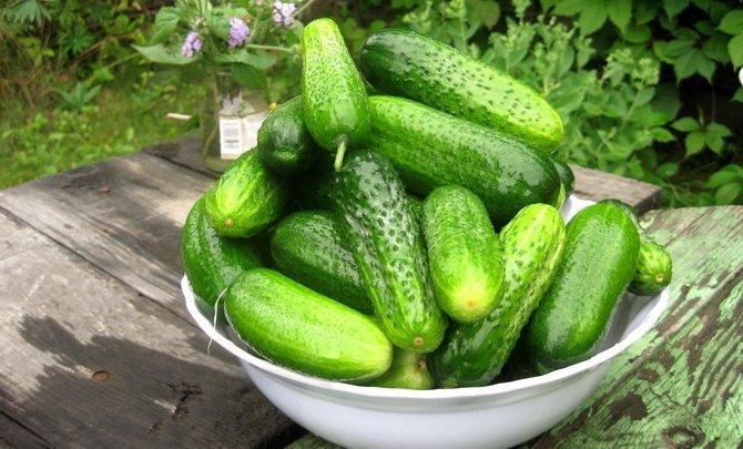Высокоурожайные и наиболее вкусные самоопыляемые сорта огурц.