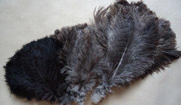 Фотография страусиных перьев, pero.pro