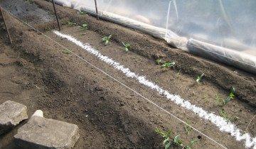 Удобрение почвы суперфосфатными удобрениями, legom.info