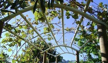 Как быстро и недорого сделать навес для винограда