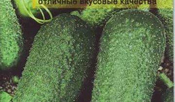 Семена огурца сорта Тарапунька