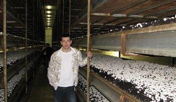 Выращивание грибов шампиньонов на полках, pokeroff.ru