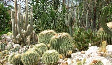Изображение кактусов в зимнем саду, peredelka.tv