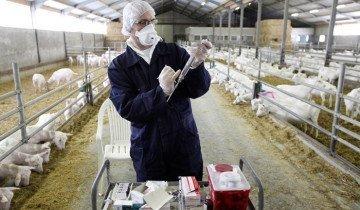 Обследование коз ветеринарным врачом, bigpicture.ru