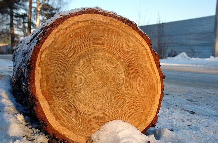 Обработка спилов дерева