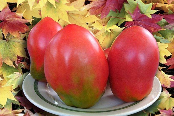 Картинки помидоры для детей