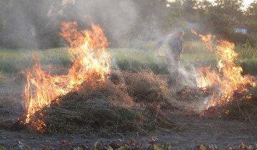 Сжигание отработанной подстилки, ggpht.com