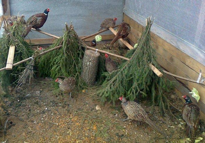 Домик для фазана своими руками