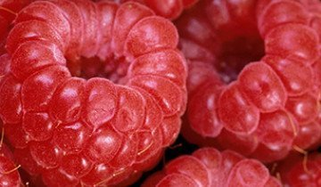 Лучшая русская малина в каталоге наиболее популярных отечественных сортов