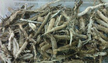 Изображение сушенных корней подсолнечника, liveinternet.ru