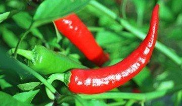 А чем еще поможет красный перец, польза и вред которого неоднократно описывались в литературе?