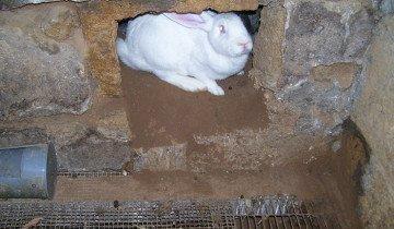 Фотография кролика в норе, fermer.ru