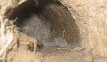 Изображение кроличьего гнезда, krol.org.ua