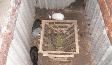 Содержание кроликов в яме, ya-fermer.ru