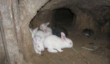 Выращивание кроликов в ямах, atmagro.ru
