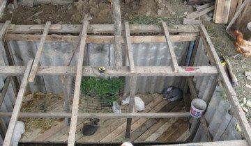 На фото кролики в яме, atmagro.ru