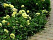 Садовая дорожка из планок