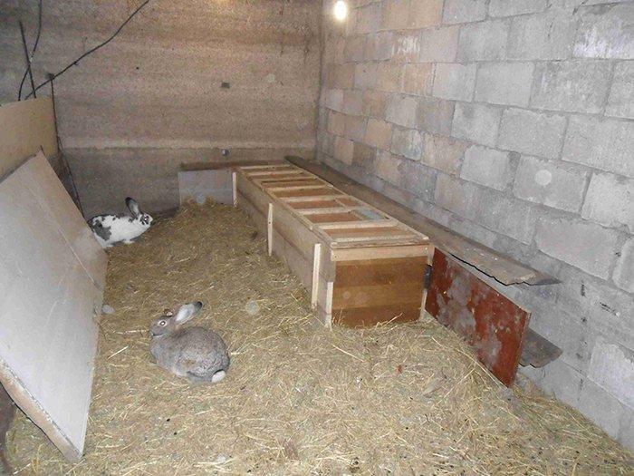 Как сделать сарай для кроликов