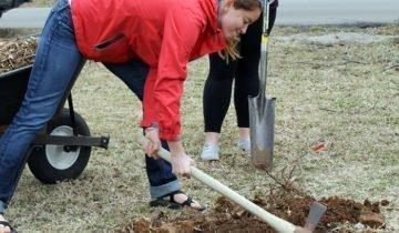 Подготовка ямы для посадки, ncat.org