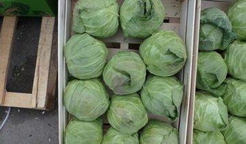 Фото капусты в деревянных ящиках, fruitinfo.ru