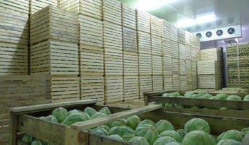Хранение капусты на складе, vladam-seeds.com.ua