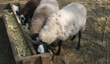 Фото кормушки для овец, sovetclub.ru