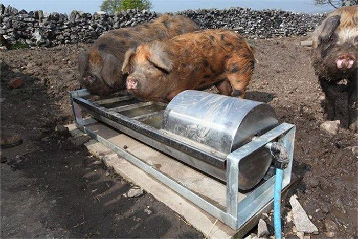 Поїлка для свиней своими руками