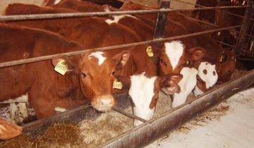 Фото кормушек на ферме, supersadovnik.net