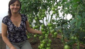 На фото урожай томатов, radikal.ru
