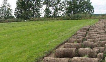 Фото разных видов газонов, udec.ru