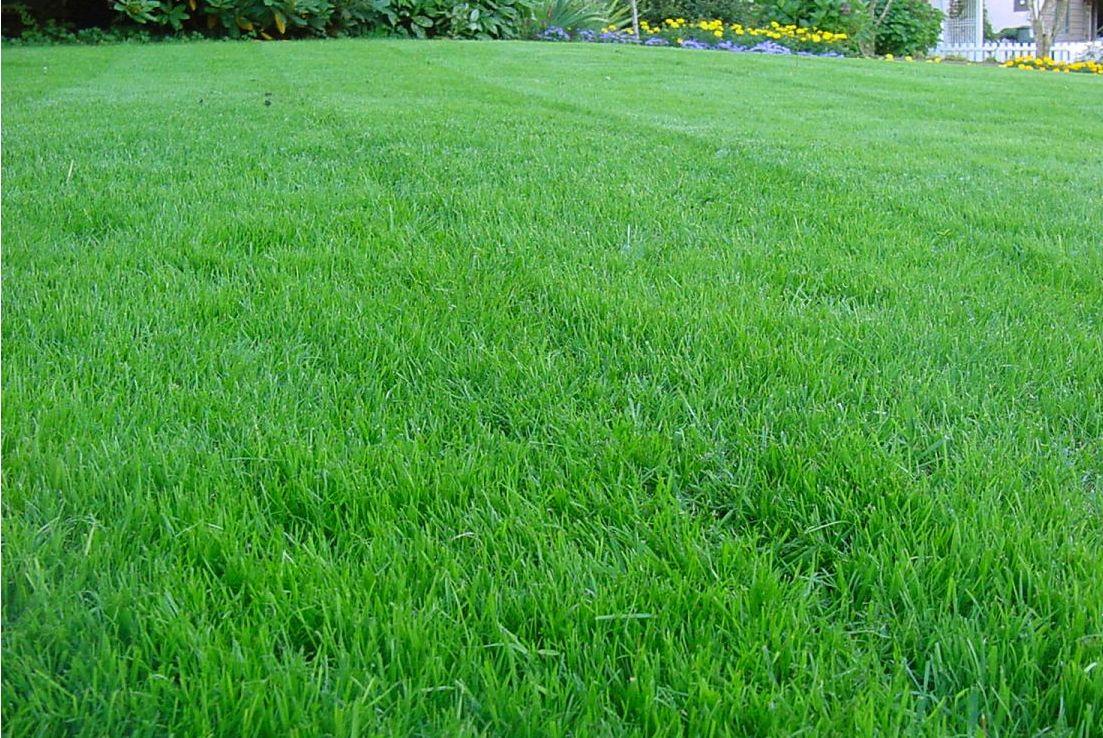 какие травы можно при аллергии