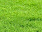 Зеленый газон в рулонах