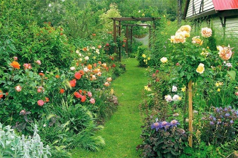 На фото розы в саду, sta.ck.ua