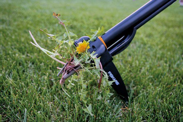 Фотография борьбы с сорняками на газоне своими руками