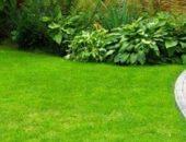 Как сделать газон своими руками