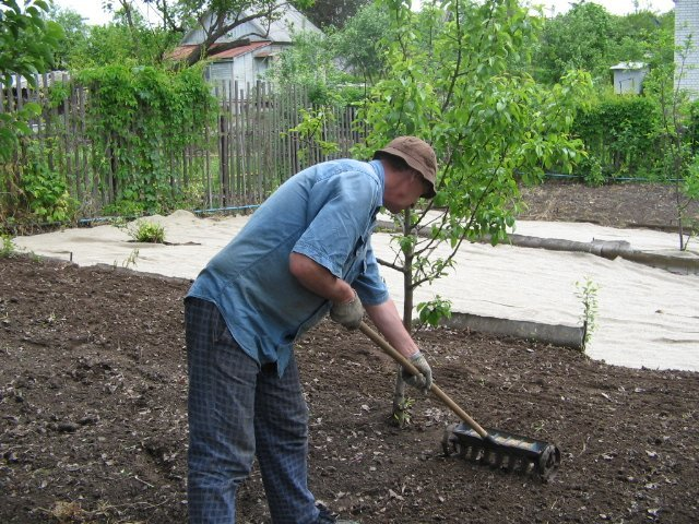 На фото подготовка почвы перед посевом газона
