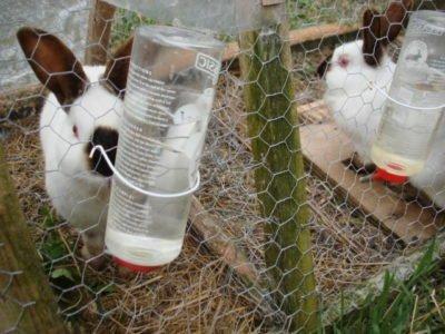 На изображений вода для кролика