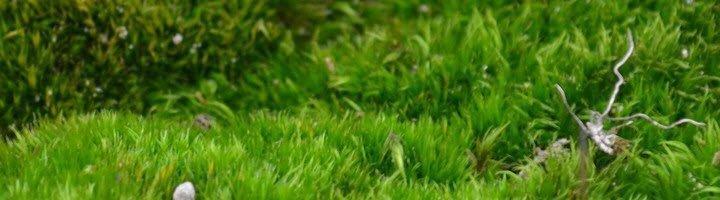 На фото изображен мох на газоне