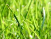 На фото изображен газон