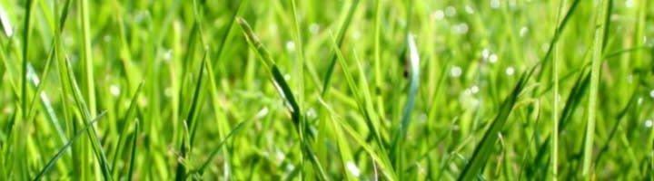 Осенний посев травы