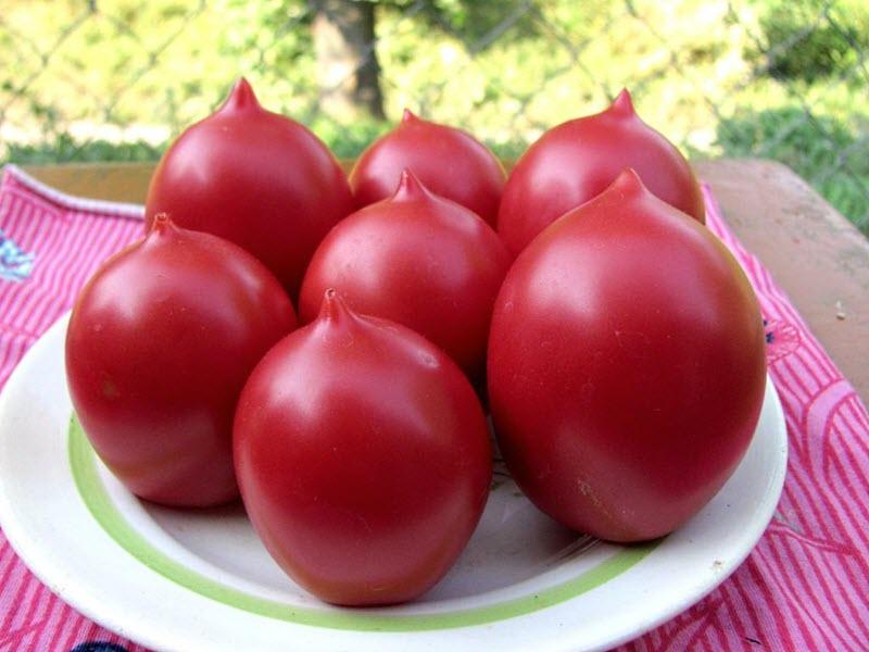 На фото помидоры де Барао Царские