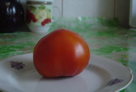 На фотографий томат прекрасная леди F1