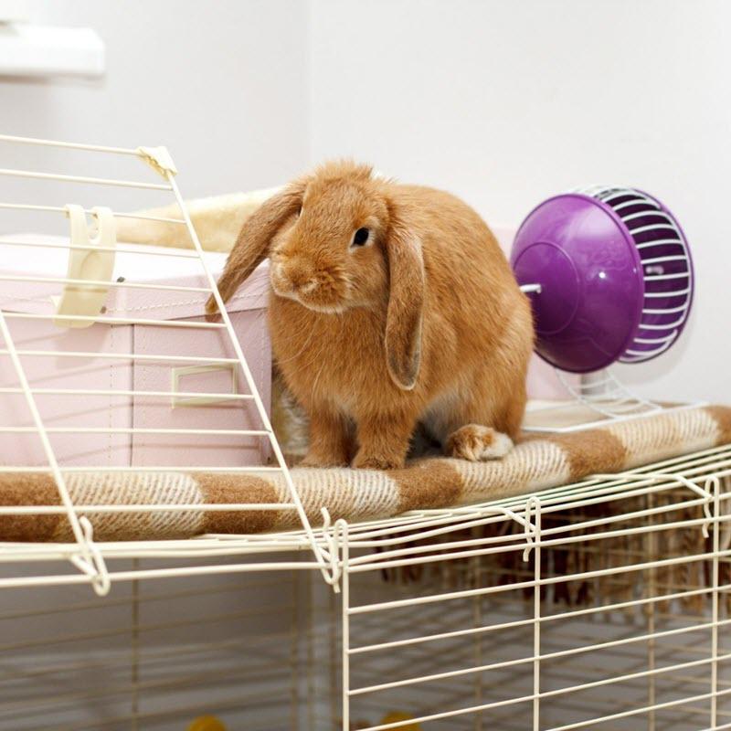 На фото содержание декоративных кроликов в домашних условиях